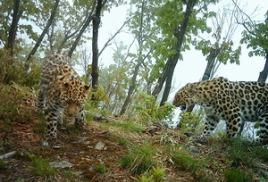 Гостей из Индии впечатлила смелость сотрудников «Земли леопарда»